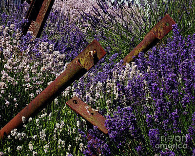 Photograph - Lavender Abstract I by Chuck Flewelling