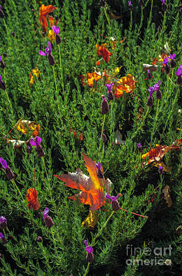 Photograph - Lavender And Autumn Mixed by Tikvah's Hope