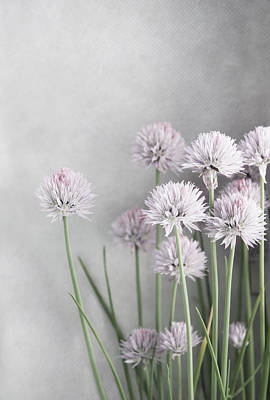 Chives Photograph - Lavender And Green Chives On Soft Gray by Brooke T Ryan