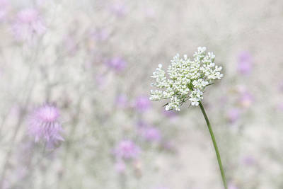 Knapweed Photograph - Lavender And Lace by Lori Deiter