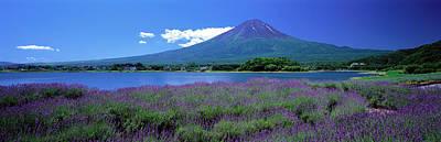 Lavender And Lake Kawaguchi Yamanashi Art Print