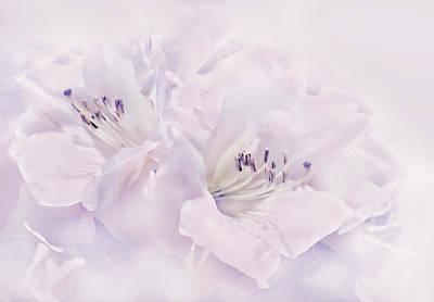 Photograph - Lavender Azalea Flowers by Jennie Marie Schell