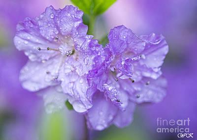 Photograph - Lavender Azalea by Wanda Krack