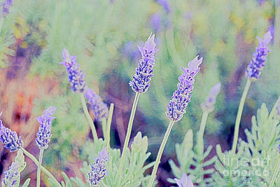 Lavender Art Print by Cassandra Buckley