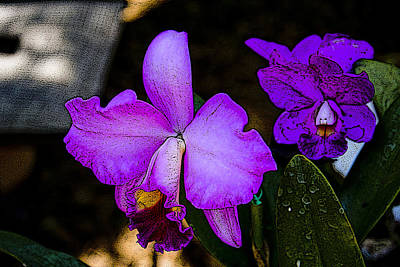 Photograph - Lavender Catleya Orchid by Jonah Gibson