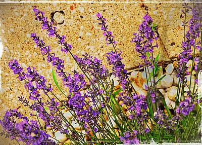 Photograph - Lavender  by Chris Berry