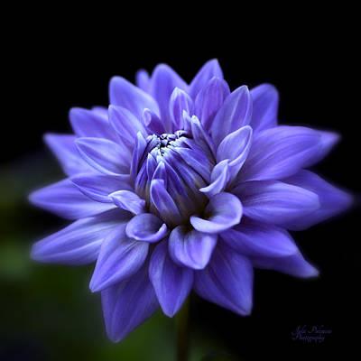 Photograph - Lavender Dahlia by Julie Palencia