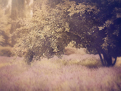 French Countryside Photograph - Lavender Dreams by Amy Weiss