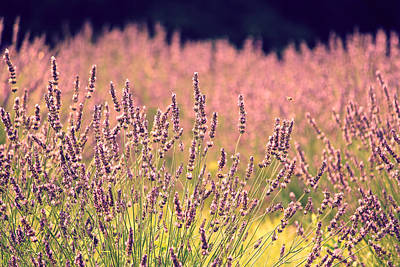 Art Print featuring the photograph Lavender Dreams by Lynn Sprowl