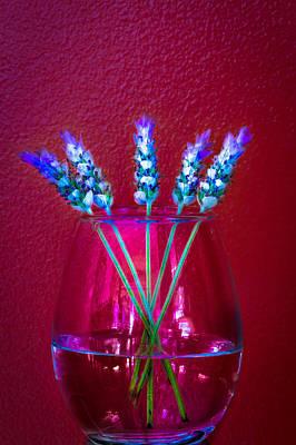 Photograph - Lavender by Edgar Laureano