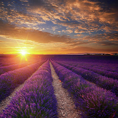 Lavender Field At Sunset Art Print by Mammuth
