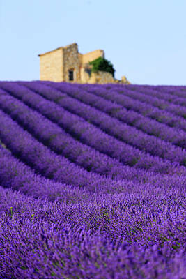 Lavender Field At Sunset Art Print by Republica