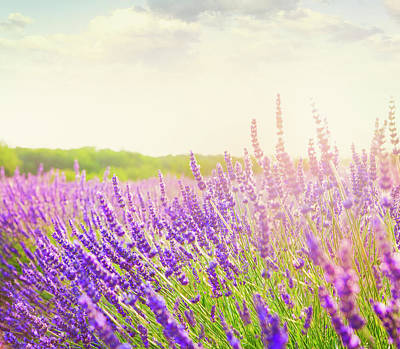 Photograph - Lavender Field In Provence by Brzozowska
