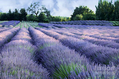 Photograph - Lavender Field by Kathleen Gauthier