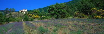 Purple Flower Flower Image Photograph - Lavender Field La Drome Provence France by Panoramic Images