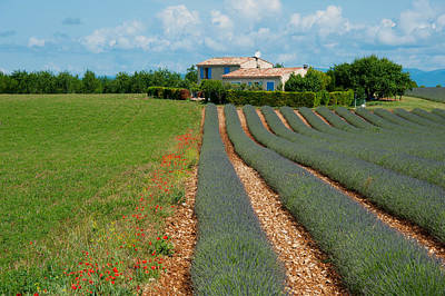 Provence Photograph - Lavender Field, Plateau De Valensole by Panoramic Images