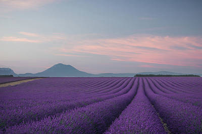 France Provence Photograph - Lavender Field by Rostovskiy Anton