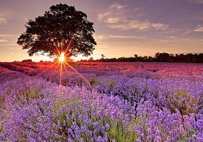 Photograph - Lavender Field by Sandra Kreuzinger