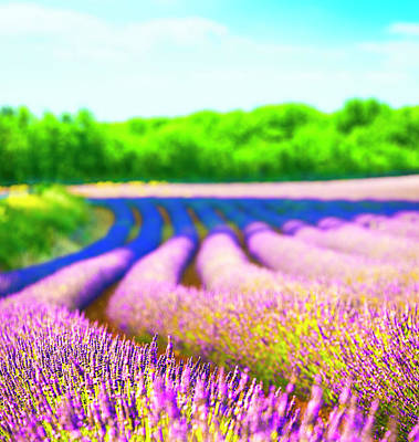Photograph - Lavender Field by Spooh