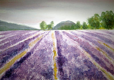 Lavender Fields Tasmania Art Print by Elvira Ingram