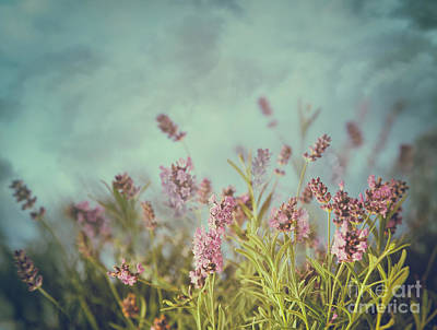 Photograph - Lavender Flowers With Vintage Color Filters by Sandra Cunningham