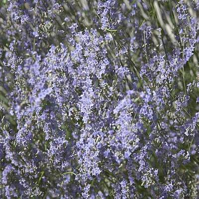 Summer Wall Art - Photograph - #lavender by Georgia Fowler