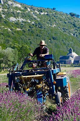 Photograph - Lavender Harvest by Dany Lison