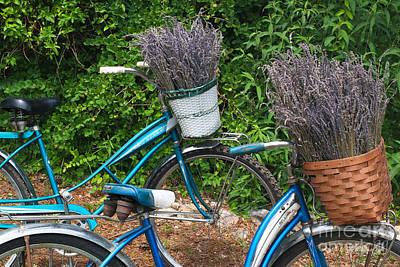 Photograph - Lavender Harvest by Geri Glavis