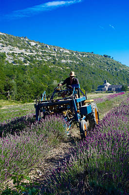 Photograph - Lavender Harvest In Provence by Dany Lison