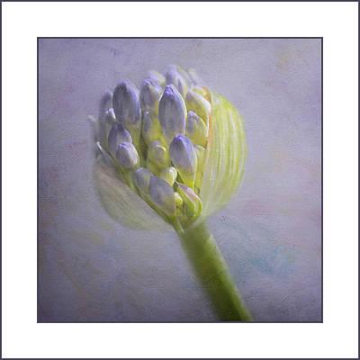 Photograph - Lavender Haze by Kim Swanson