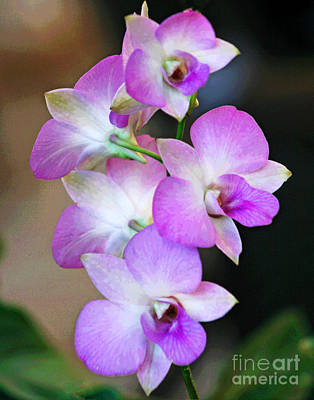 Photograph - Lavender Honolulu Orchids by Larry Oskin