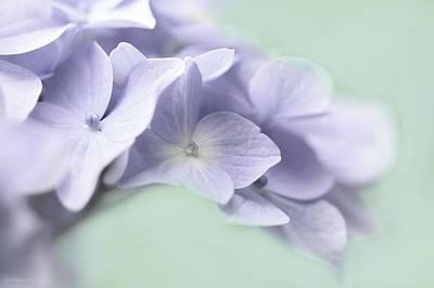 Photograph - Lavender Hydrangea Flower Macro by Jennie Marie Schell