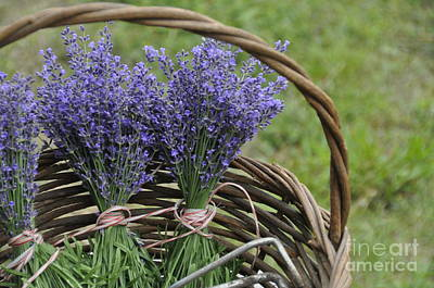 Lavender In A Basket Art Print