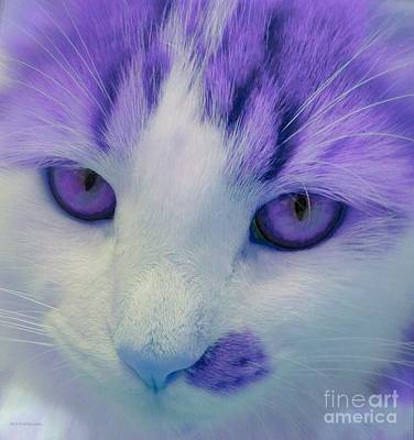 Photograph - Lavender Kitten by Anita Lewis