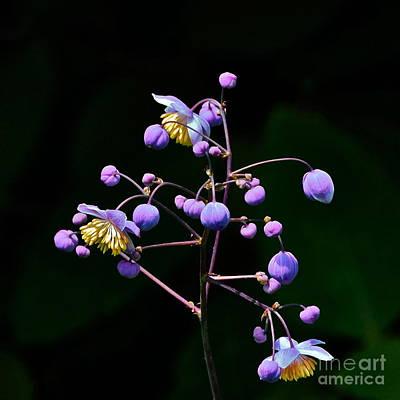 Photograph - Lavender Mist Detail by Byron Varvarigos