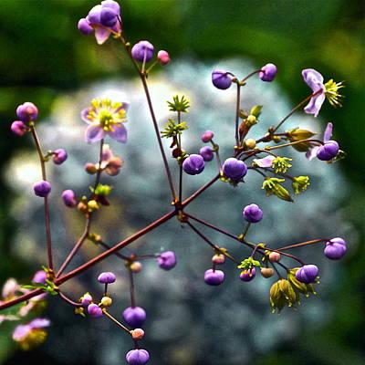 Photograph - Lavender Mist Explosion by Byron Varvarigos