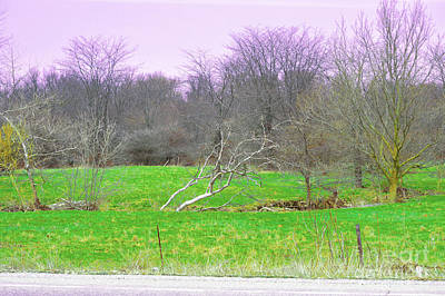 Indiana Photograph - Lavender Morning by Alys Caviness-Gober