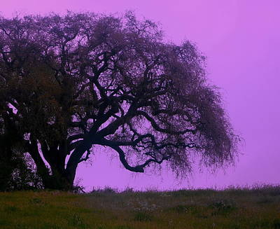 Photograph - Lavender Oak by Tamyra Crossley