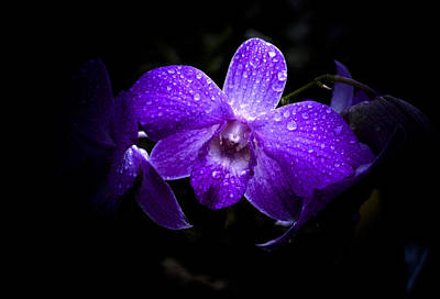 Photograph - Lavender Orchids by Julie Palencia