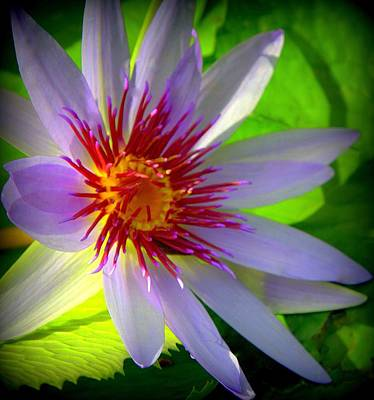 Florida Florals Photograph - Lavender Passion by Karen Wiles