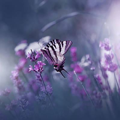 Bugs Photograph - Lavender Queen... by Juliana Nan