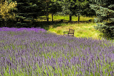 Lavender Rest Art Print by Kathy Bassett