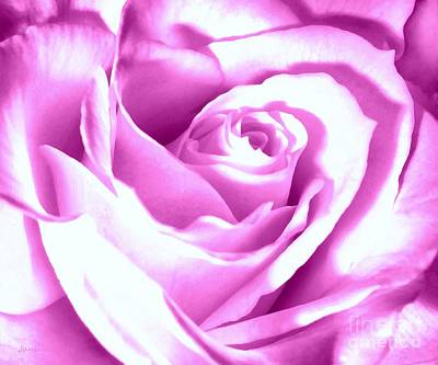 Lavender Rose  Art Print by Janine Riley