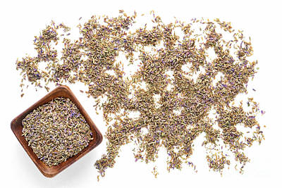 Lavender Flowers Photograph - Lavender Seeds by Olivier Le Queinec