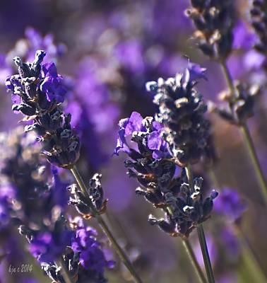 Lavender Stems Art Print by Kari Nanstad
