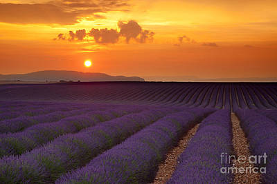 Popular Rustic Neutral Tones - Lavender Sunset - Provence France by Brian Jannsen