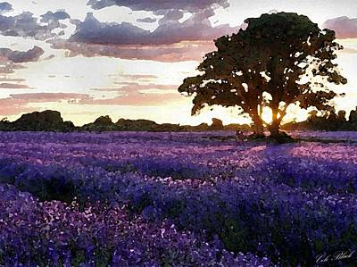 Lavender Sunset Art Print by Cole Black