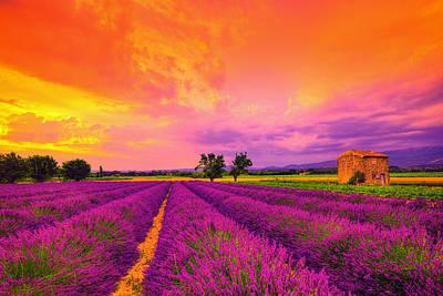 Provence Photograph - Lavender Sunset by Midori Chan
