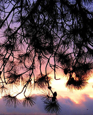 Photograph - Lavender Sunset Painting by Will Borden