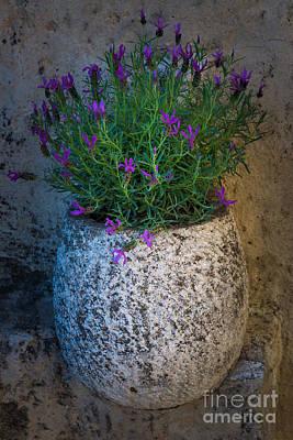 Lavender Vase Art Print by Inge Johnsson